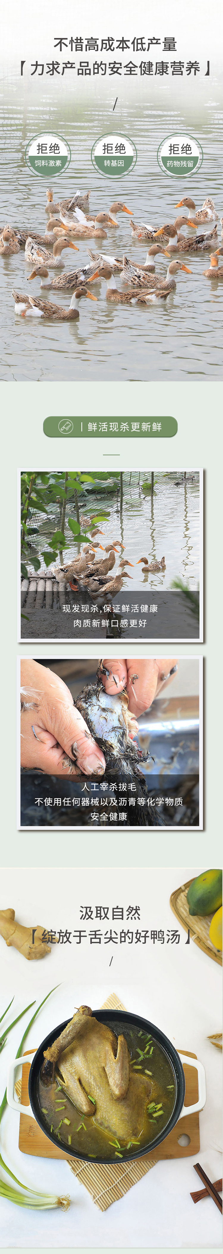 皖南稻田鸭